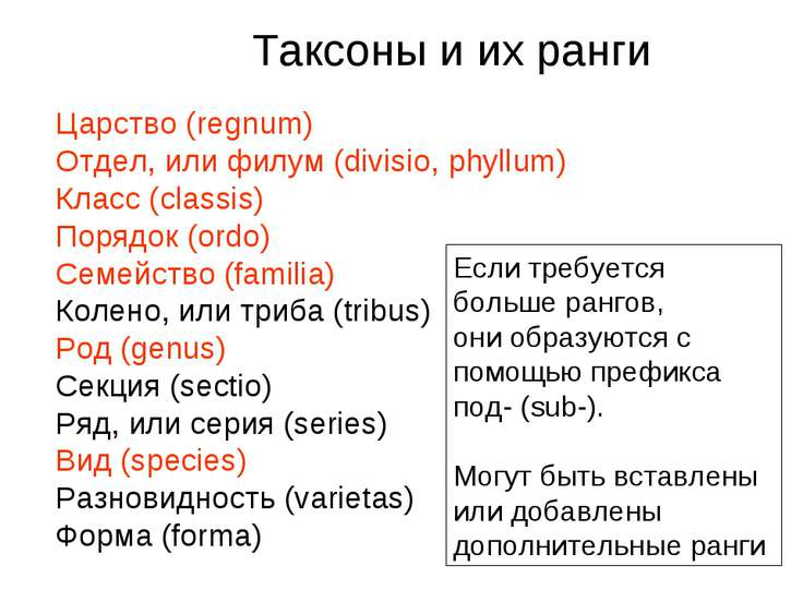 Царство (regnum) Отдел, или филум (divisio, phyllum) Класс (classis) Порядок ...
