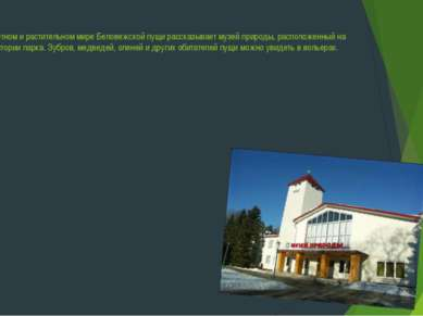 О животном и растительном мире Беловежской пущи рассказывает музей природы, р...