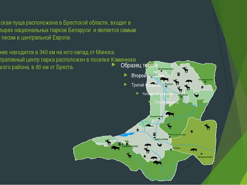 Беловежская пуща расположена в Брестской области, входит в число четырех наци...
