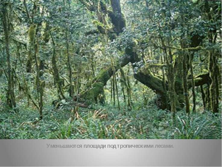 Уменьшаются площади под тропическими лесами.