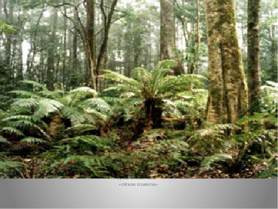 Тропические леса – «лёгкие планеты»