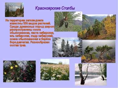 Красноярские Столбы На территории заповедника известны 550 видов растений. Ср...