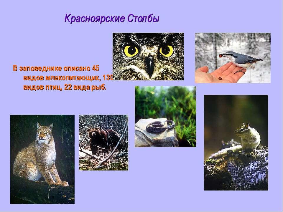 Красноярские Столбы В заповеднике описано 45 видов млекопитающих, 130 видов п...