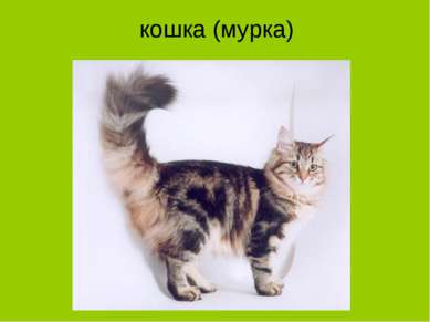 кошка (мурка)