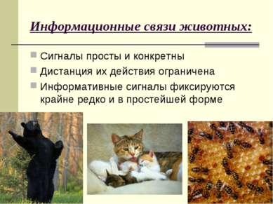 Информационные связи животных: Сигналы просты и конкретны Дистанция их действ...