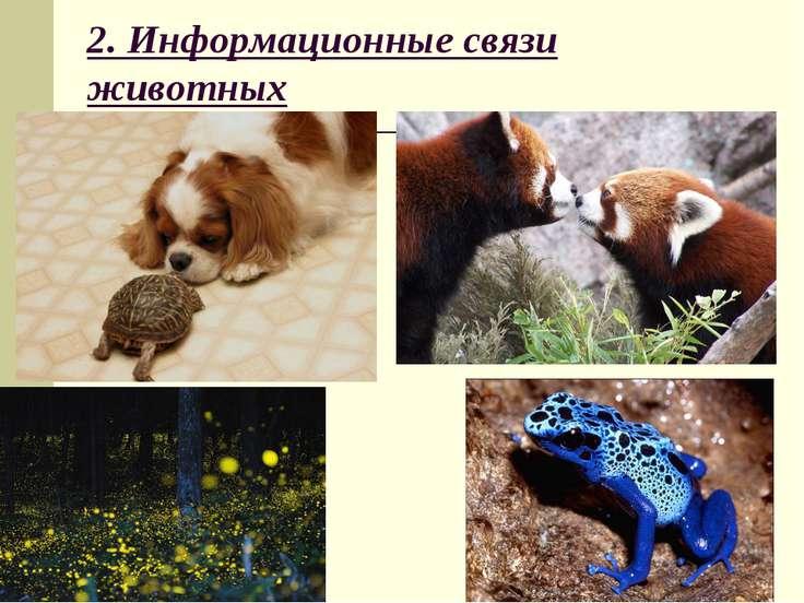 2. Информационные связи животных