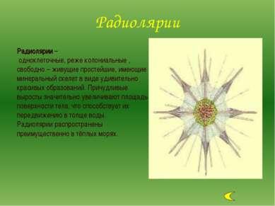 Радиолярии – одноклеточные, реже колониальные , свободно – живущие простейшие...
