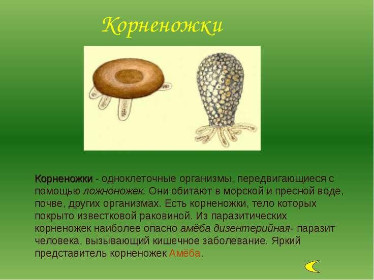 Корненожки - одноклеточные организмы, передвигающиеся с помощью ложноножек. О...