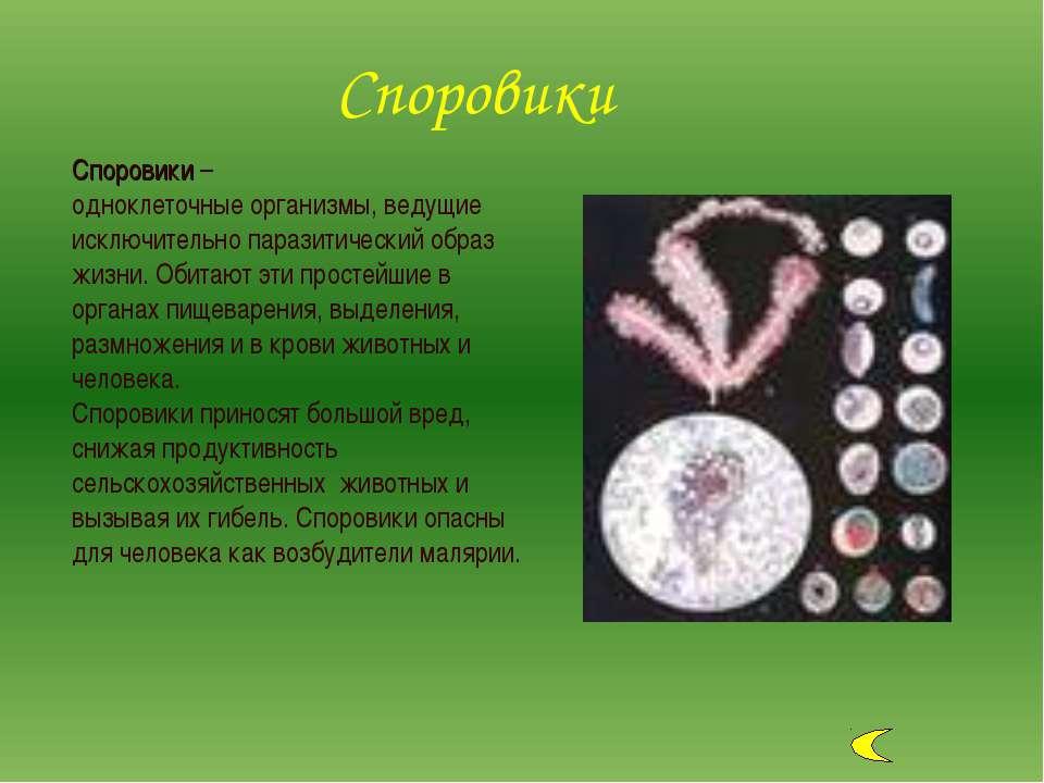 Споровики – одноклеточные организмы, ведущие исключительно паразитический обр...
