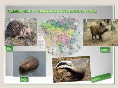 Смешанные и широколиственные леса Ёж Кабан Бобр Барсук
