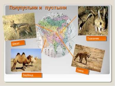 Полупустыни и пустыни Тушканчик Гиена Верблюд Шакал