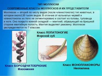 Моллюски — второй по числу видов (после членистоногих) тип животных, в которо...