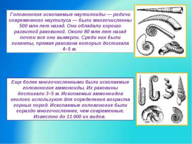 Головоногие ископаемые наутилоиды — родичи современного наутилуса — были мног...