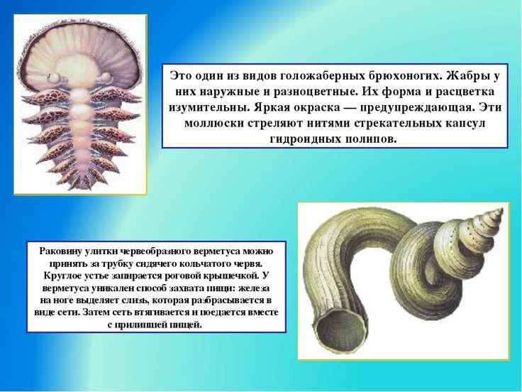 Это один из видов голожаберных брюхоногих. Жабры у них наружные и разноцветны...