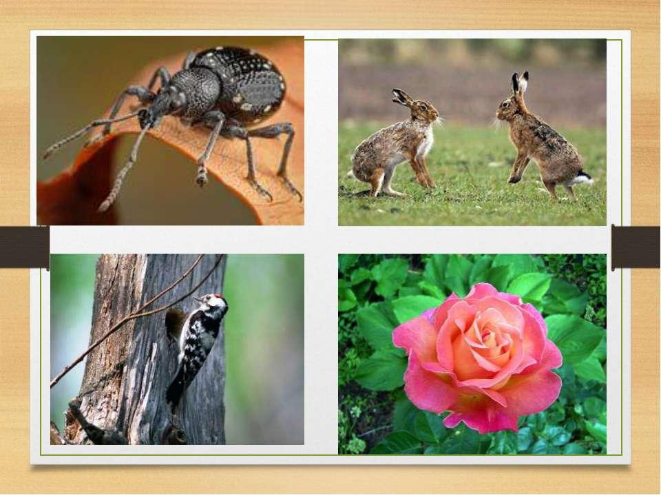 № Способ достижения биологического прогресса определение примеры       ...