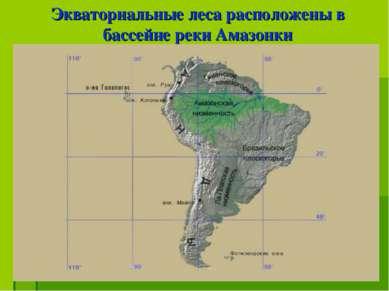 Экваториальные леса расположены в бассейне реки Амазонки