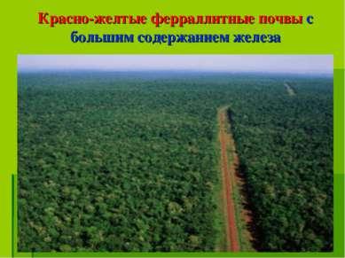 Красно-желтые ферраллитные почвы с большим содержанием железа