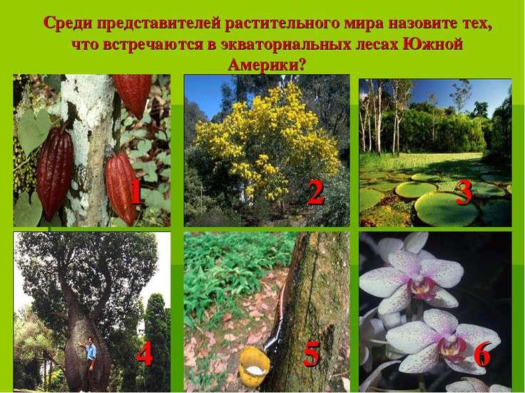 Среди представителей растительного мира назовите тех, что встречаются в экват...