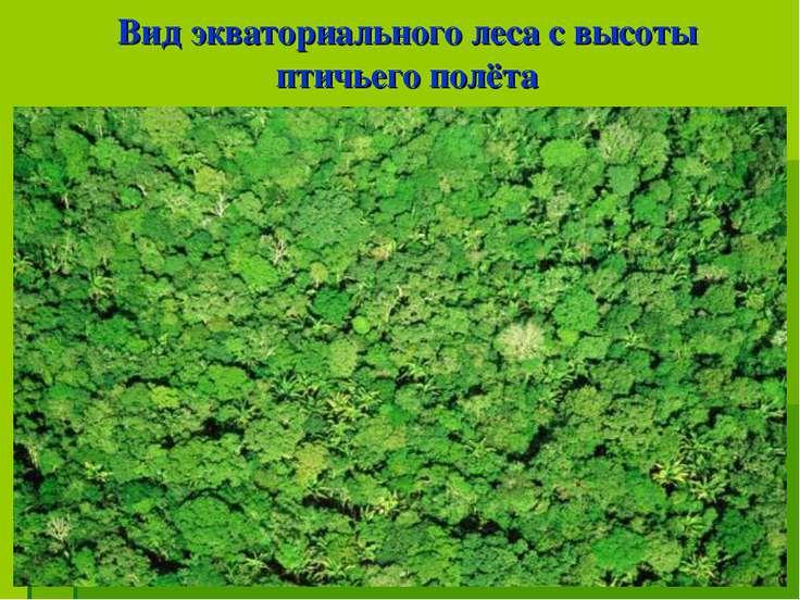 Вид экваториального леса с высоты птичьего полёта