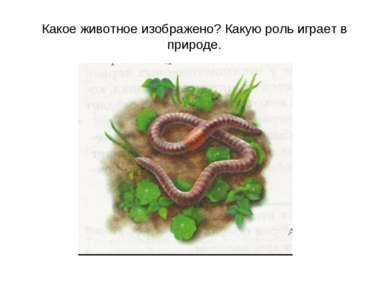 Какое животное изображено? Какую роль играет в природе.