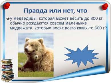 у медведицы, которая может весить до 800 кг, обычно рождаются совсем маленьки...