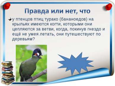 у птенцов птиц турако (бананоедов) на крыльях имеются когти, которыми они цеп...