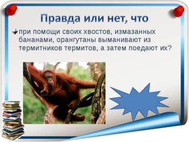 при помощи своих хвостов, измазанных бананами, орангутаны выманивают из терми...