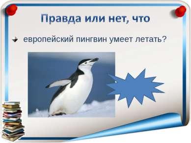 европейский пингвин умеет летать? неправда