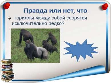 гориллы между собой ссорятся исключительно редко? правда