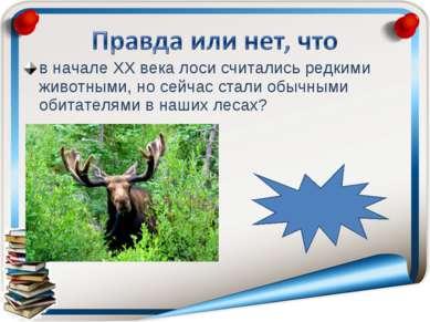 в начале ХХ века лоси считались редкими животными, но сейчас стали обычными о...