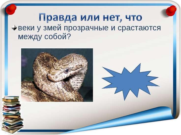 веки у змей прозрачные и срастаются между собой? правда
