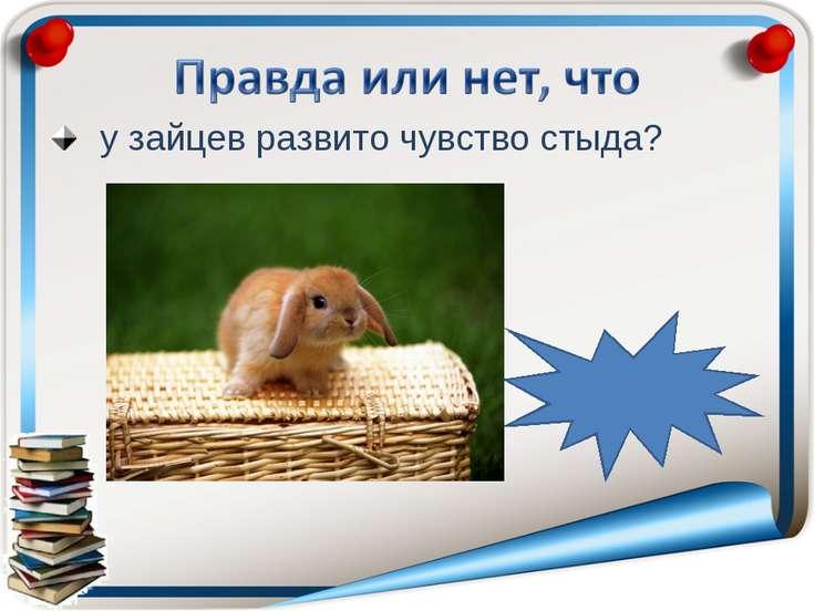 у зайцев развито чувство стыда? неправда