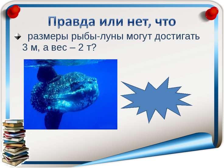 размеры рыбы-луны могут достигать 3 м, а вес – 2 т? правда