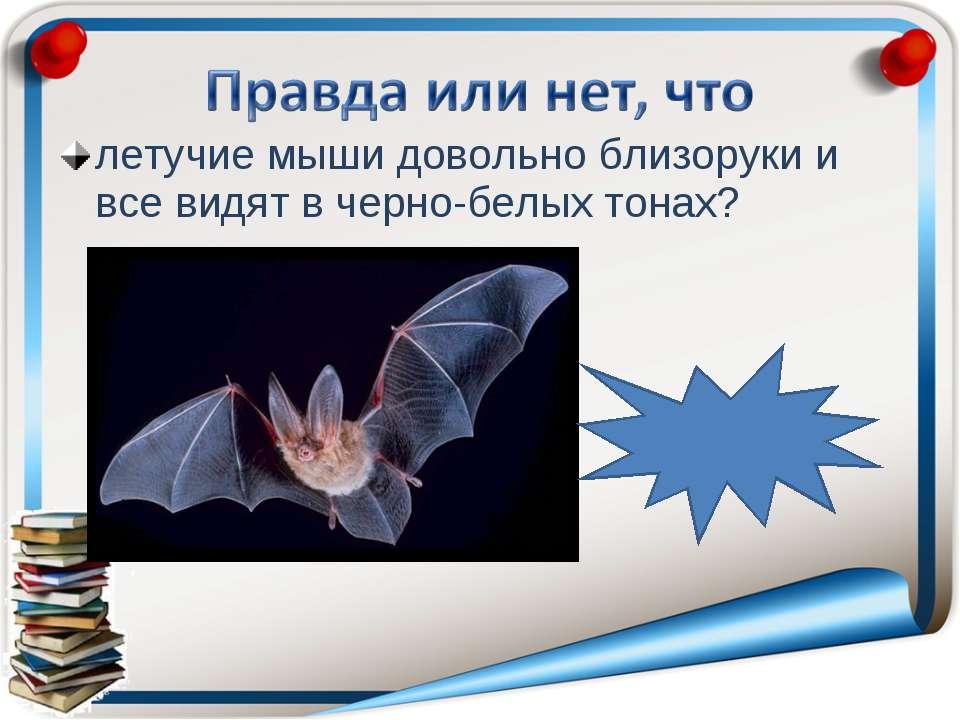 летучие мыши довольно близоруки и все видят в черно-белых тонах? правда