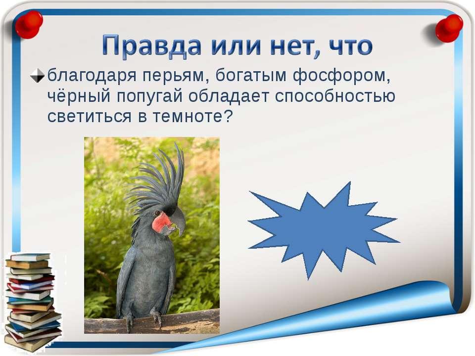 благодаря перьям, богатым фосфором, чёрный попугай обладает способностью свет...