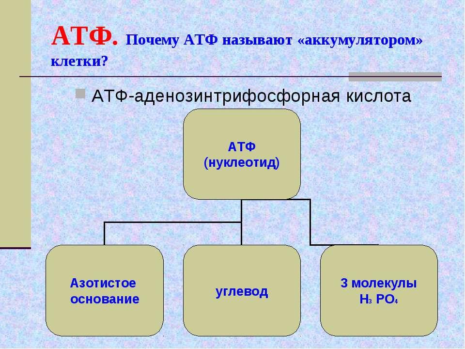 АТФ. Почему АТФ называют «аккумулятором» клетки? АТФ-аденозинтрифосфорная кис...