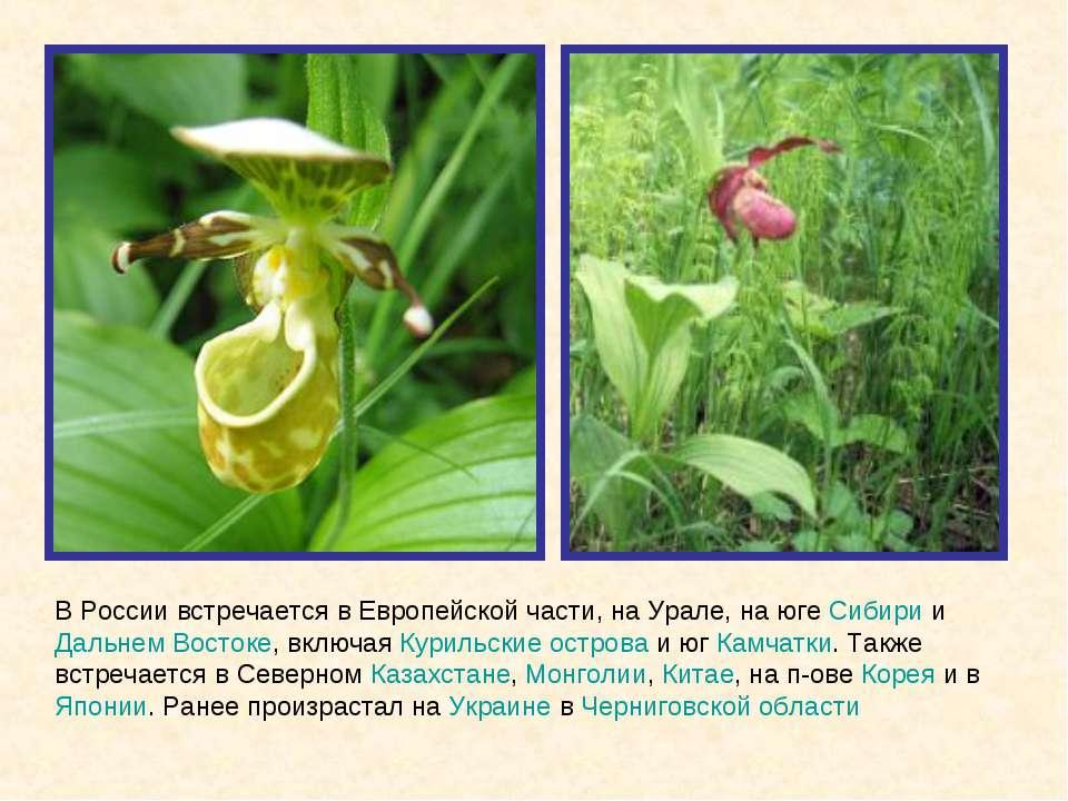 В России встречается в Европейской части, на Урале, на юге Сибири и Дальнем В...