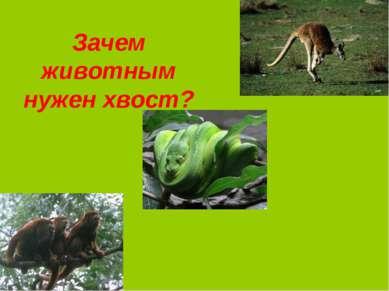 Зачем животным нужен хвост?