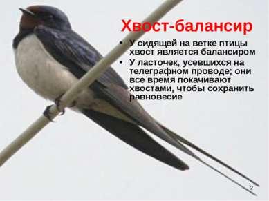* Хвост-балансир У сидящей на ветке птицы хвост является балансиром У ласточе...