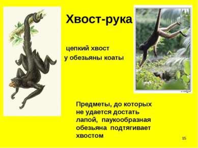 * Хвост-рука цепкий хвост у обезьяны коаты Предметы, до которых не удается до...