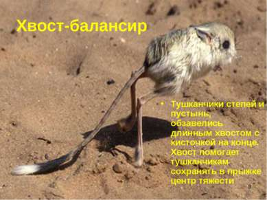 * Хвост-балансир Тушканчики степей и пустынь, обзавелись длинным хвостом с ки...