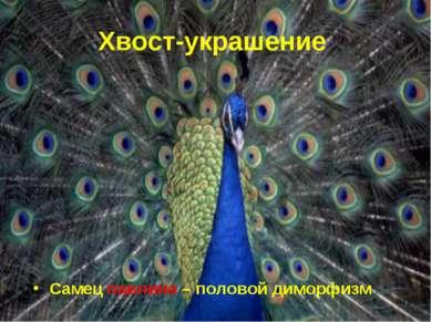 * Хвост-украшение Самец павлина – половой диморфизм
