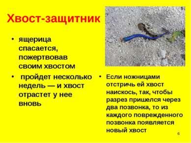 * Хвост-защитник ящерица спасается, пожертвовав своим хвостом пройдет несколь...