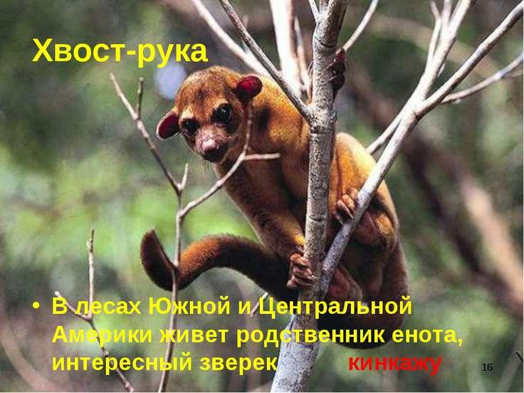* Хвост-рука В лесах Южной и Центральной Америки живет родственник енота, инт...