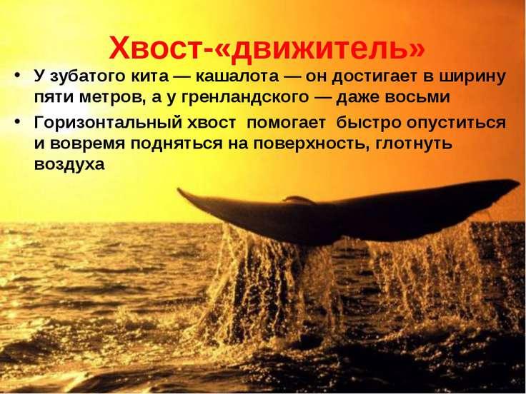 * Хвост-«движитель» У зубатого кита — кашалота — он достигает в ширину пяти м...