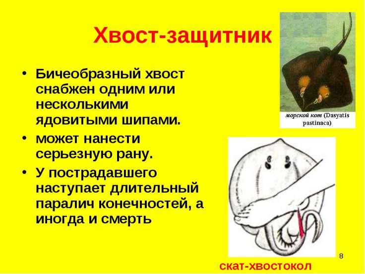 * Хвост-защитник Бичеобразный хвост снабжен одним или несколькими ядовитыми ш...
