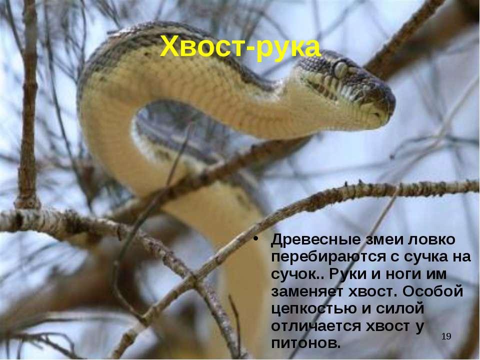 * Хвост-рука Древесные змеи ловко перебираются с сучка на сучок.. Руки и ноги...