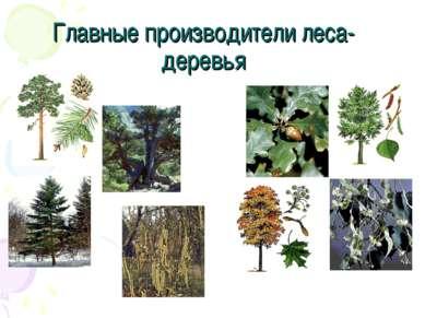 Главные производители леса- деревья