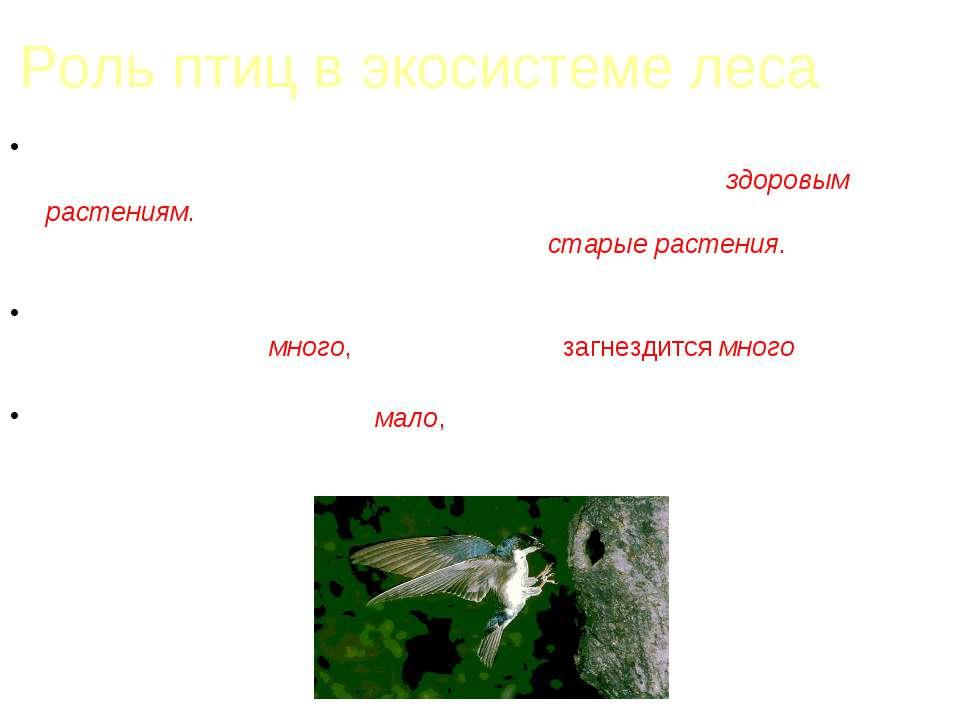 Роль птиц в экосистеме леса Если в лесу количество насекомых, поедающих кору ...