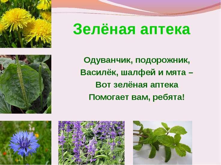 Зелёная аптека Одуванчик, подорожник, Василёк, шалфей и мята – Вот зелёная ап...